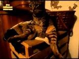 Кот сидит как человек прикол