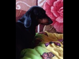 leaf_lime video