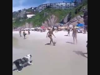 Собака играет в волейбол! Приколы 2016, Смешные животные 2016, funny animals, do