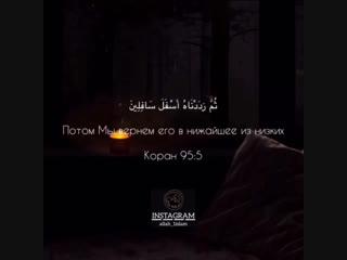surah: «at_Tin» - (التين)