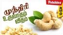 Cashew Nut processing Factory முந்திரி உருவாகும் விதம் Cashew Industrial video