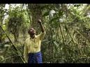 Этот человек вырастил огромный лес за 37 лет
