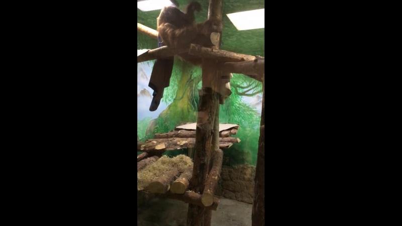 Захар - новый питомец Екатеринбургского зоопарка