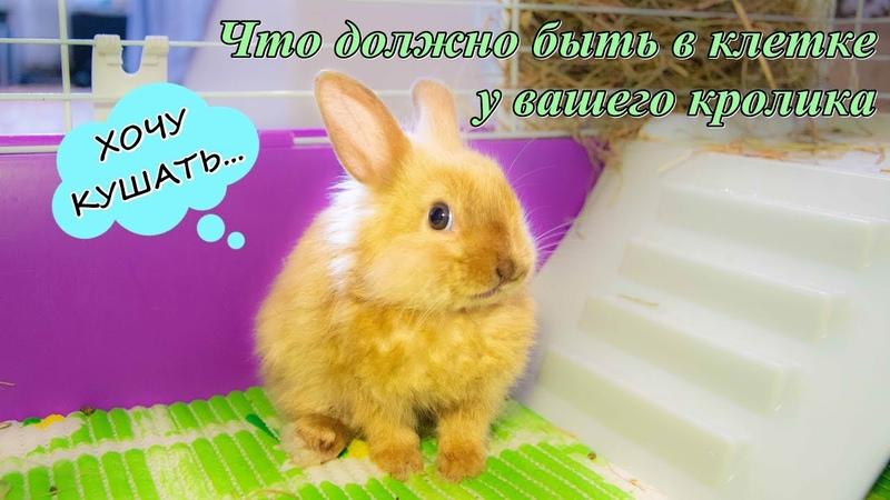 КАК ПОДГОТОВИТЬ КЛЕТКУ ПЕРЕД ПОЯВЛЕНИЕМ КРОЛИКА В ДОМЕ | Что должно быть в клетке у кролика.
