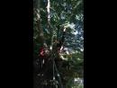 Миша на дереве смелых