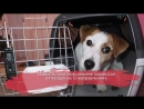 Домашним животным разрешили ездить в поездах без сопровождения хозяев
