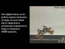 Гарвардский робот таракан может перемещаться под водой