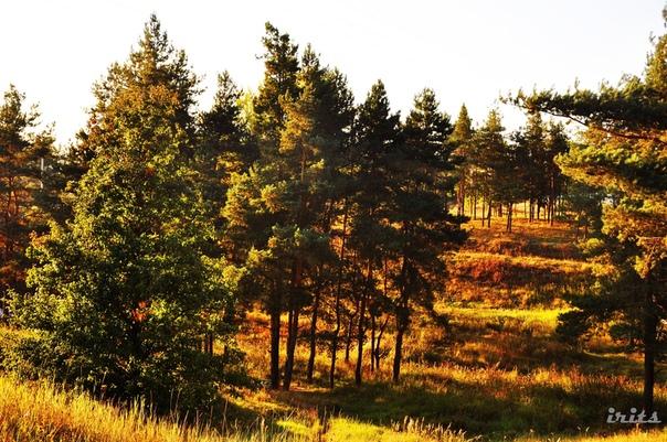 По факту вырубки деревьев в парке Сорокалетия Октября возбуждено уголовное дело