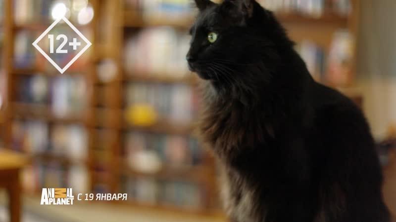 Адские кошки