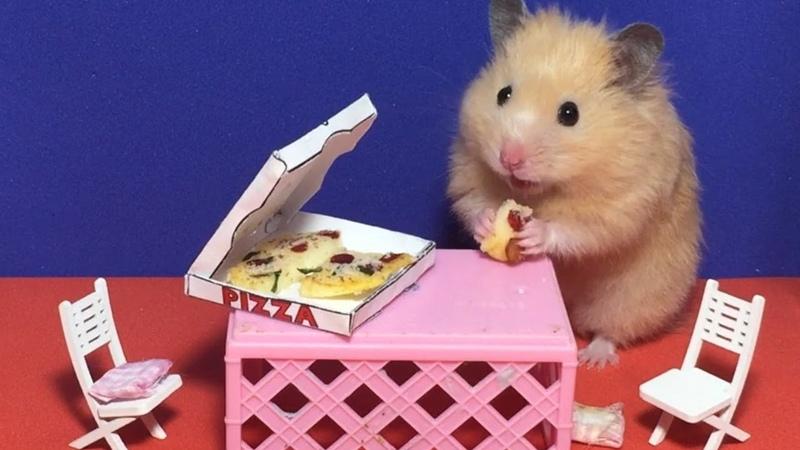 🐹Hamster eats miniature pizza in dollhouse🍕Minifood ミニチュアドールハウス