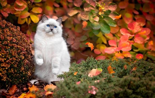 Осень — золотая пора