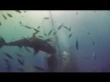 акула описалась