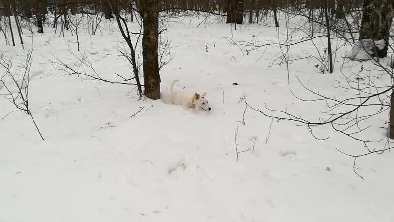 Дафна на зимней охоте