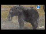 Ничего необычного , просто робоцапля и робокуча шпионят за семейством слонов.