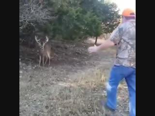 Охота на оленя (6 sec)