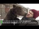 Лапа помощи_ дрессировщика в инвалидном кресле возит по Москве медведь