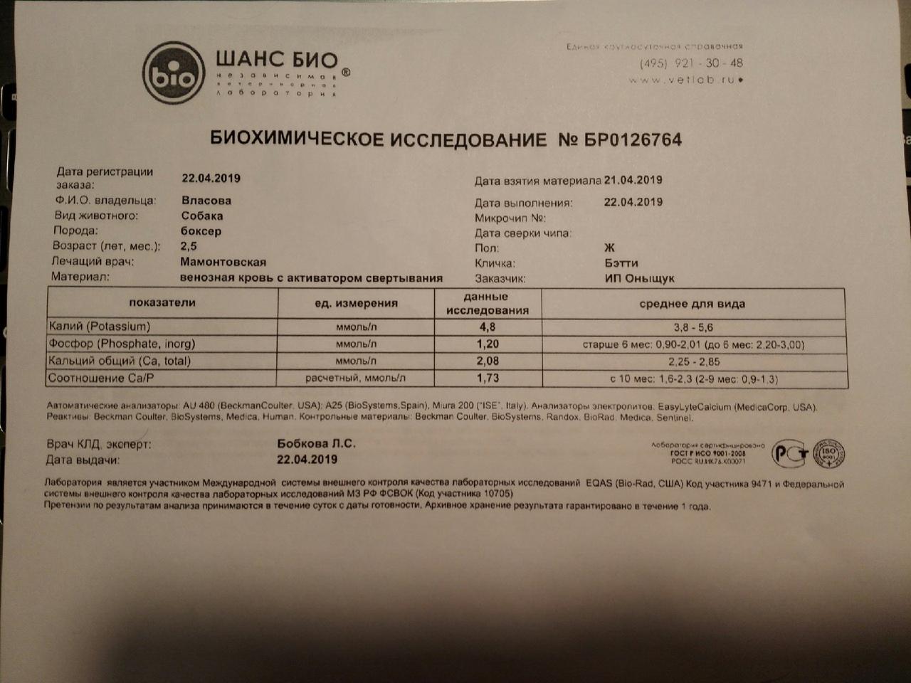 Москва, Беатрис (Бетти), сука,  14.10.2016 - Страница 3 DnMbqGE8AT4