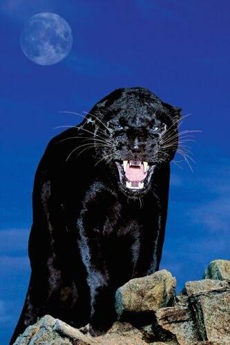 Оказалась рядом с жилищем колдуньи. Пантера остановилась, осмотрел…