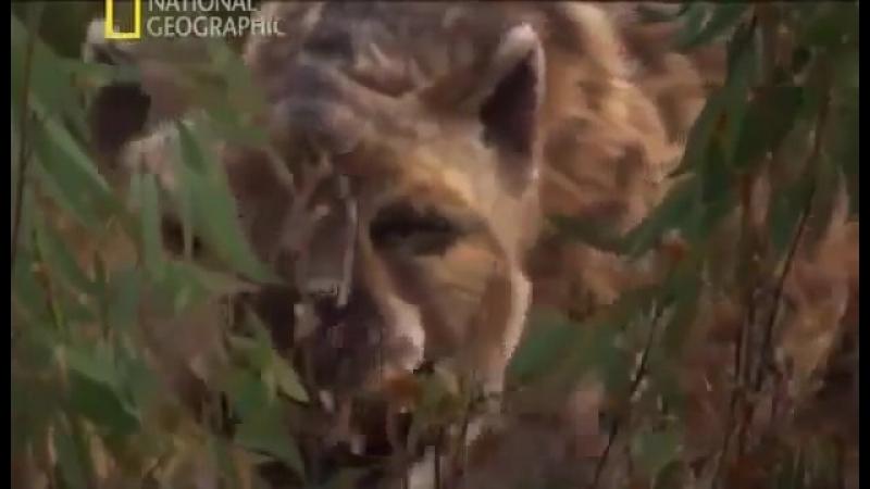 Доисторический мир Древние животные Гиенодон Документальный фильм