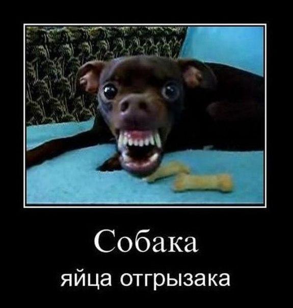 http://cs405824.userapi.com/v405824084/192/5hFM1BE_Zpg.jpg