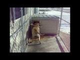 Лабрадоры самые смешные, прикольные, ржачные собаки и животные!
