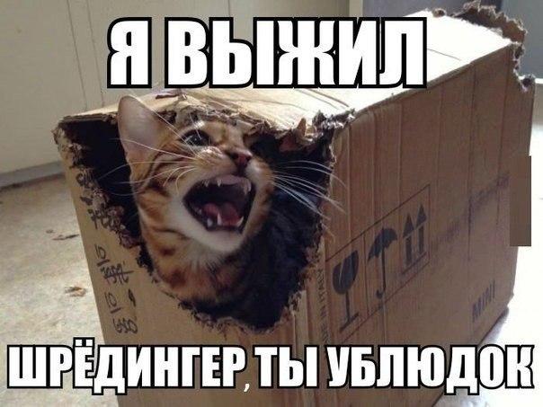http://cs322419.vk.me/v322419685/44ea/GHmYQORzBQ4.jpg