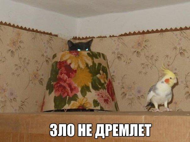 http://cs543100.vk.me/v543100609/51ca/K73f4QuQOCk.jpg