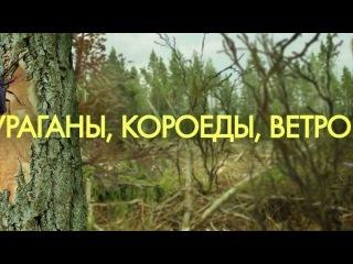 18 мая 2013 г. - Всероссийский день посадки леса