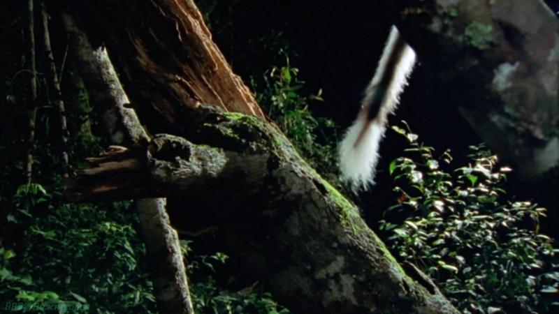 BBC «Жизнь млекопитающих (01). Совершенная модель» (Познавательный, природа, 2002)