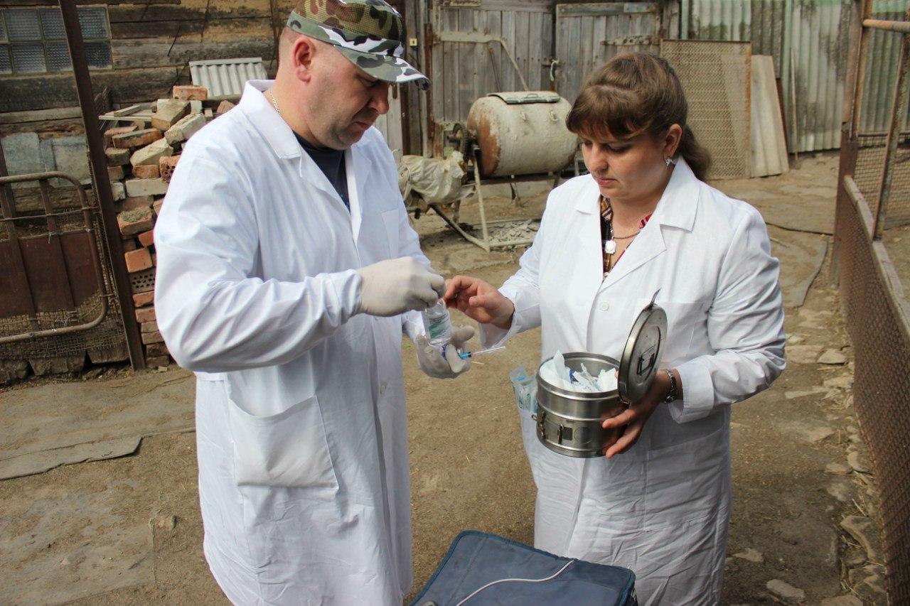 В Ростовской области кур, гусей и уток прививают от гриппа