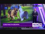 В Петербурге конфликт владельцев животных закончился стрельбой