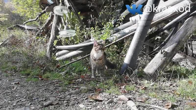 Кошачий рай кошки рыська и иштар