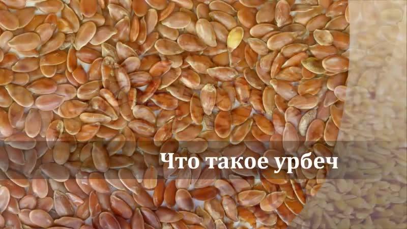 Урбеч паста из семян или орехов Самый полезный продукт Дагестана