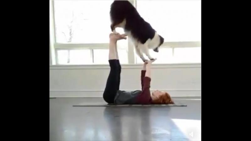 йога_с_собакой