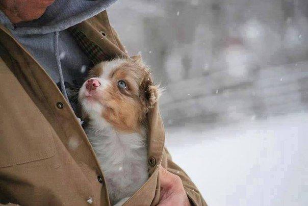 Не бросайте животных, прошу вас, они самые преданные и любят вас независимо от того, кто вы и сколько у вас денег.