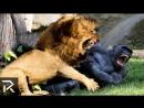 Бойцовский клуб для животных серия №2 Дикие разборки в Америке