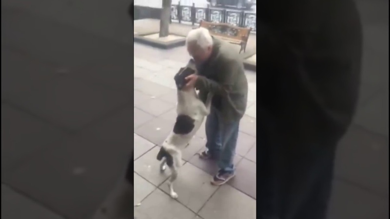 Man found his dog after 3 years ქუჩაში 3 წლის წინ დაკარგული ძაღლი ი431