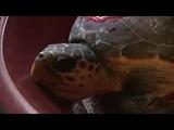 Черепахи возвращаются в свою среду обитания