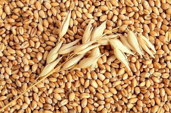 Türkiye Neden Rusya Buğday İthalatına Gümrük Vergisi Koydu