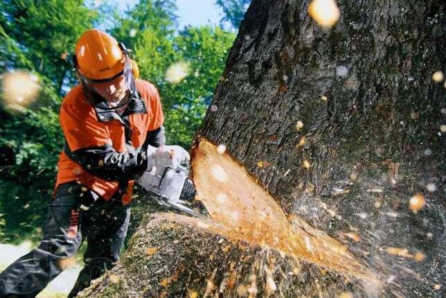 Полицейские задержали жителя пригорода, который незаконно рубил деревья в Таганроге
