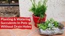 Planting Watering Succulents In Pots with No Drain Holes / Joy Us Garden