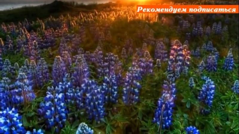 Восторг и восхищение! Армянский дудук, от которой раскрывается душа