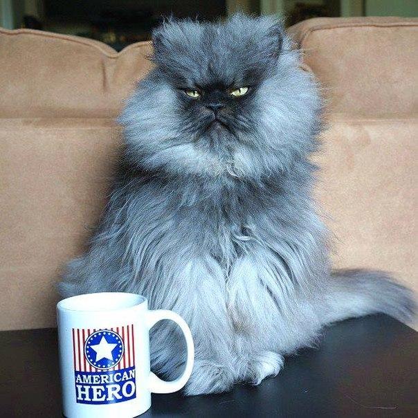 Colonel Meow (Полковник Мяу) Найдовша шерсть у кота