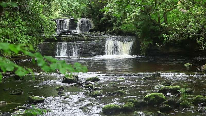 Waterfall-Forest Nature Sounds-Birds Singing-Soothing Sound of Water-Relaxing Birdsong-Mindfulness