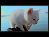 A Day in the Life of a Cute White Kitten