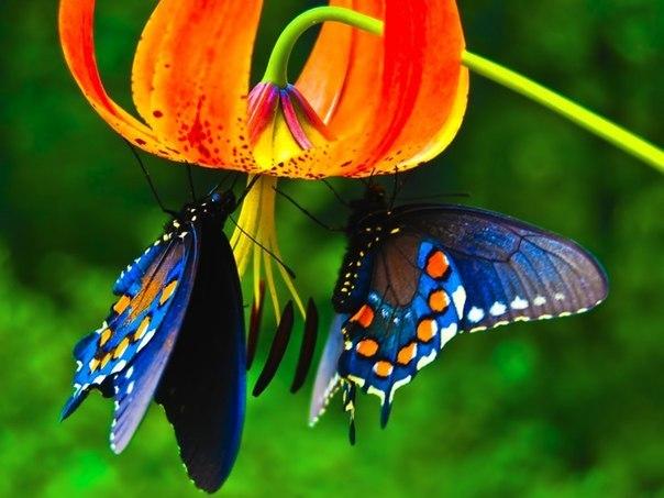 Бабочки на ночь.