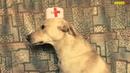 Собака Кардиолог (вырезка из Шарик Шоу 3)