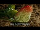Louie Schwartzberg: Nature. Beauty. Gratitude.