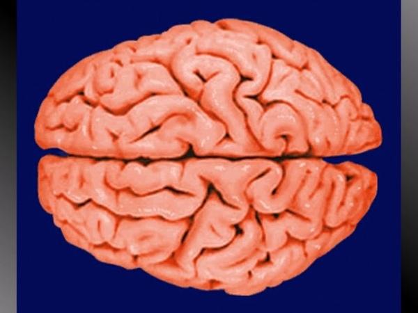 Металлические Базиды. Уникальный Способ Расширения Сознания и Самореализации. Секрет Числа Спиралей