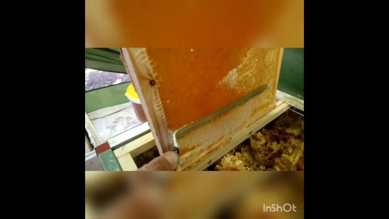 Мёд с Моей Пасеки
